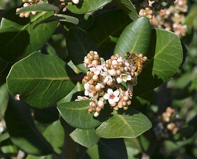 Help identifying this plant... Lemona10