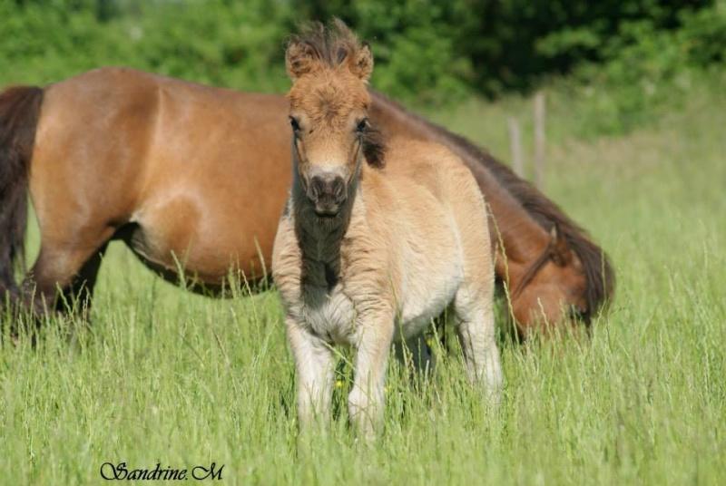 Pulieurs poneys de grandes qualités 10011510