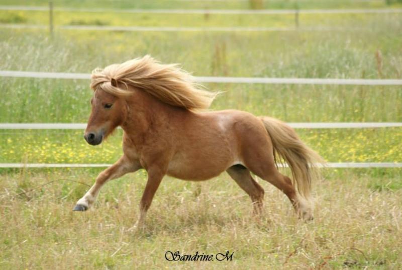 Pulieurs poneys de grandes qualités 10130410