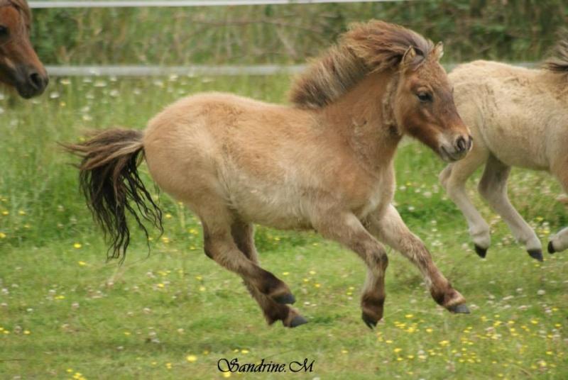 Pulieurs poneys de grandes qualités 10441310