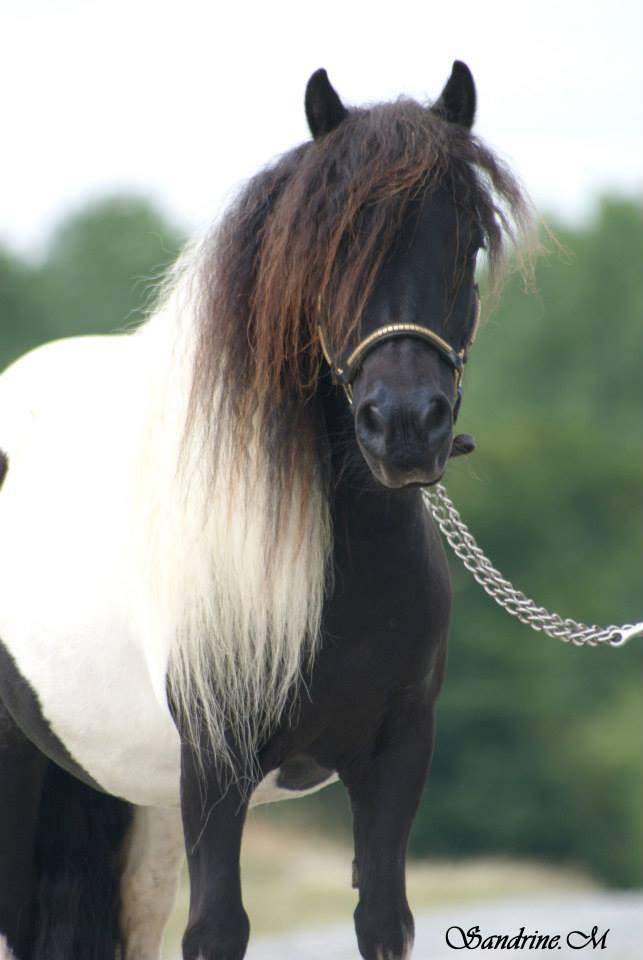 Pulieurs poneys de grandes qualités 94140110