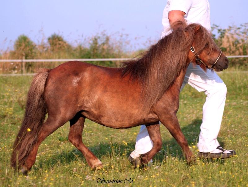 Pulieurs poneys de grandes qualités Amaryl10
