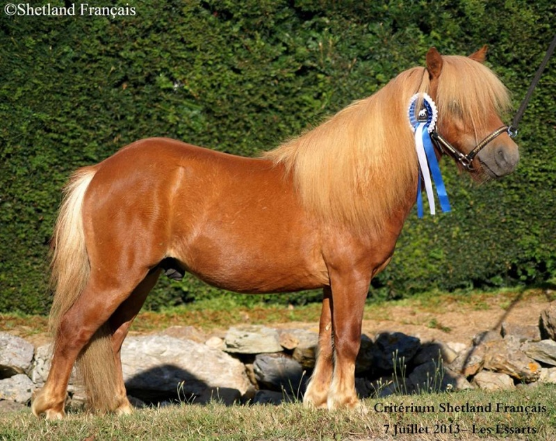 Pulieurs poneys de grandes qualités Amber_10