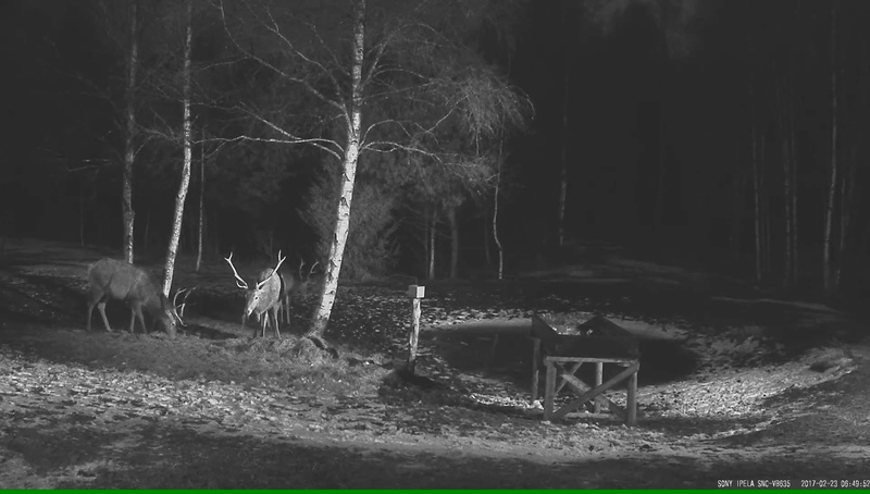 Red Deer Cam (Saarema Island)  - Page 32 Vlcsna13