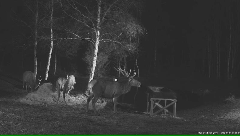 Red Deer Cam (Saarema Island)  - Page 32 Vlcsna22