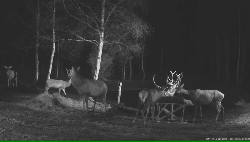 Red Deer Cam (Saarema Island)  - Page 32 Vlcsna26