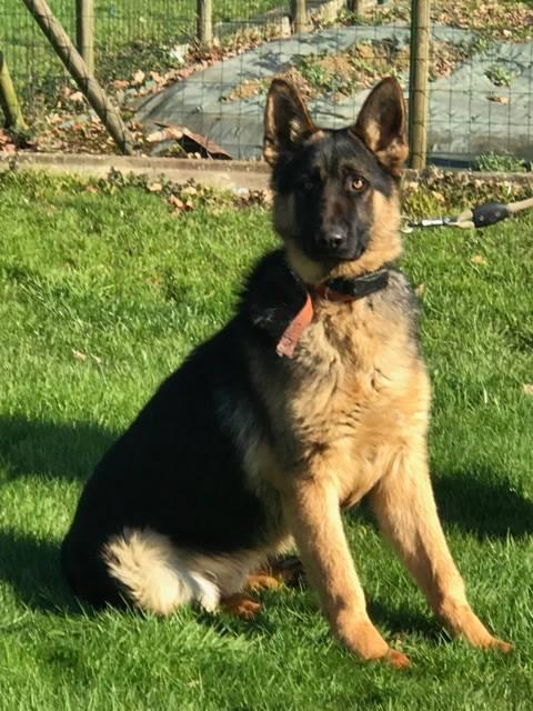 Urgence Fourrière (Bretagne) pour 2 chiens délai le 20 fevrier 16779712