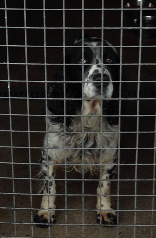 TRÈS Urgent Fourrière (Bretagne) pour 6 chiens délai 3 à 7 mars 17005911