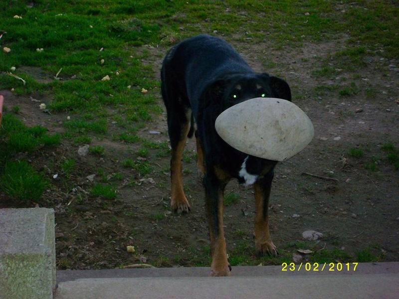 KAIZER, Mâle x beauceron (15/06/2004) - Page 3 17098410