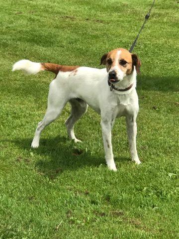 Urgence fourrière Bretagne pour 4 chiens délai 2 juin 2017 18763010