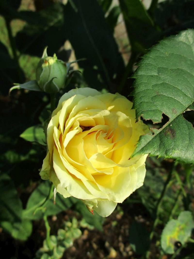 quelques bricoles au jardin Florai12