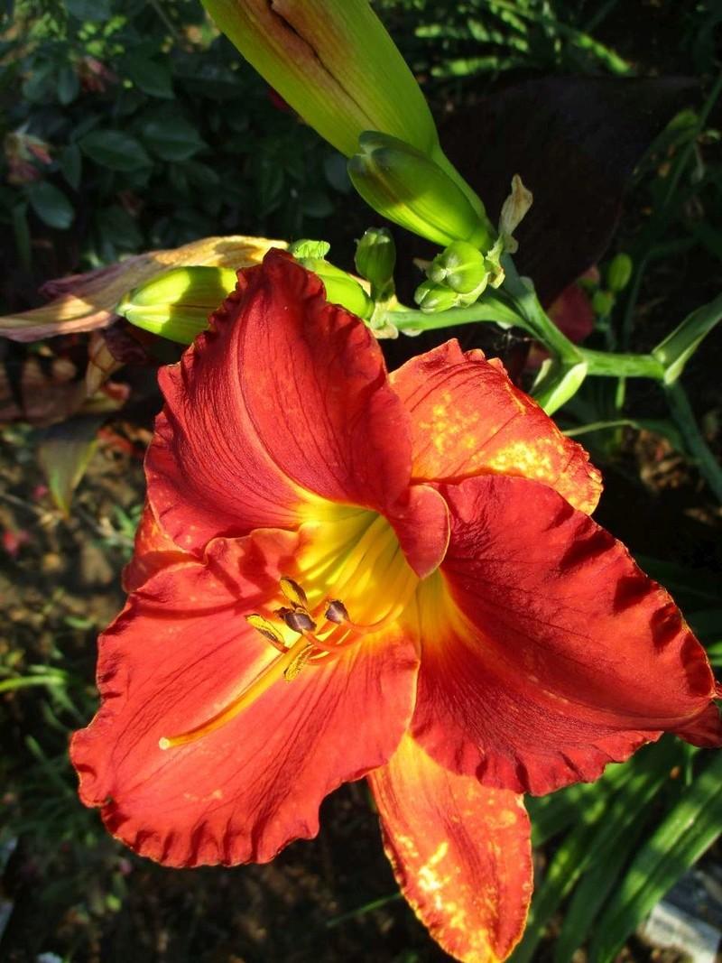 quelques bricoles au jardin Florai15