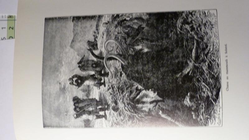 l'image de l'homme préhistorique - Page 9 P1090010