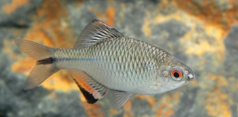 Fiches des poissons du quiz  Tanaki10