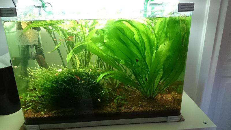 aquarium 54L brut de mapuce.bb - Page 2 Dsc_0013