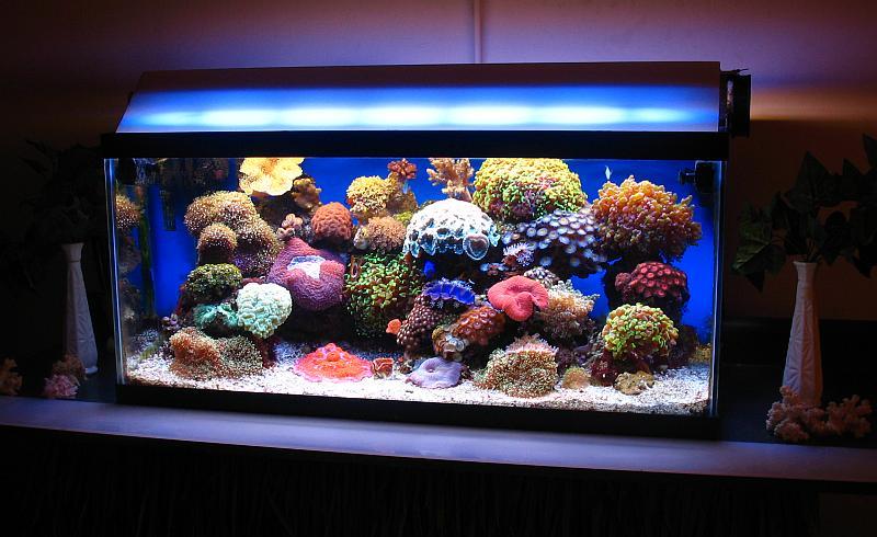 Bacs à coraux mous Nov80510