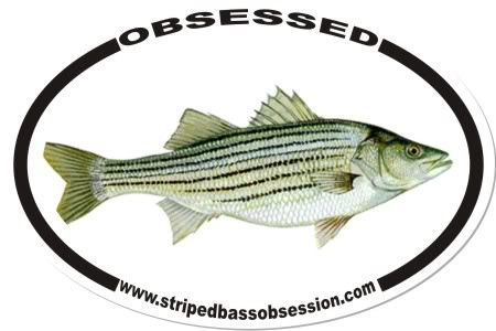 Striped Bass Obsession