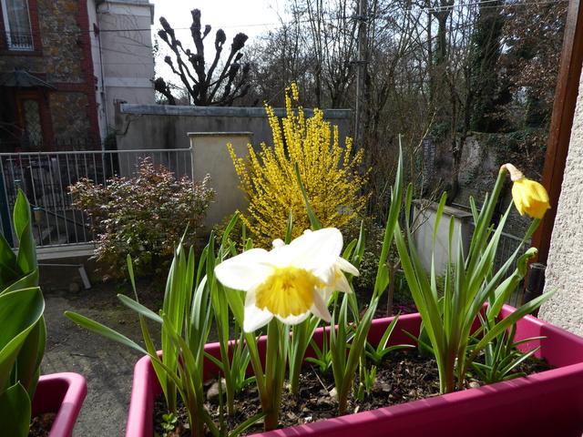 Le printemps est arrivé P1000110