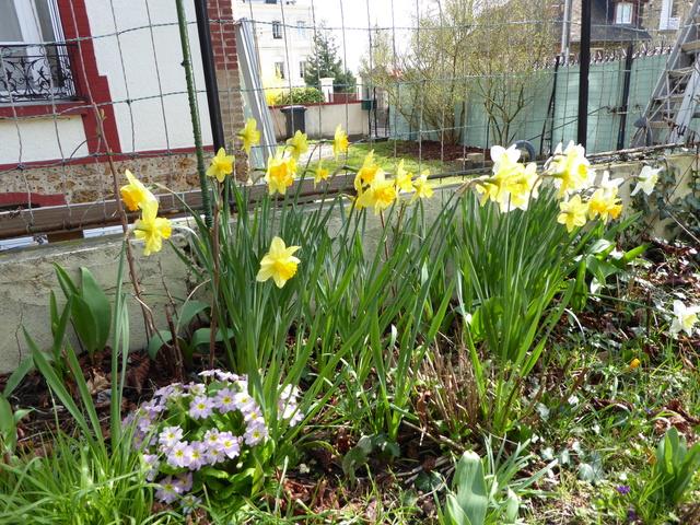 Le printemps est arrivé P1000111