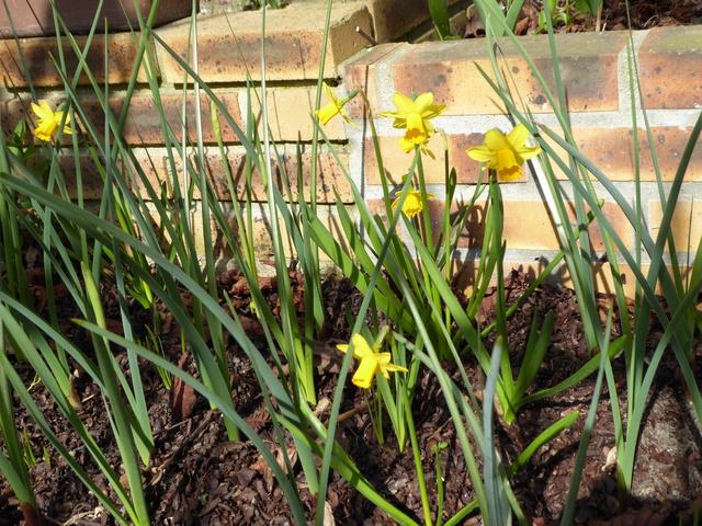 Le printemps est arrivé P1000112