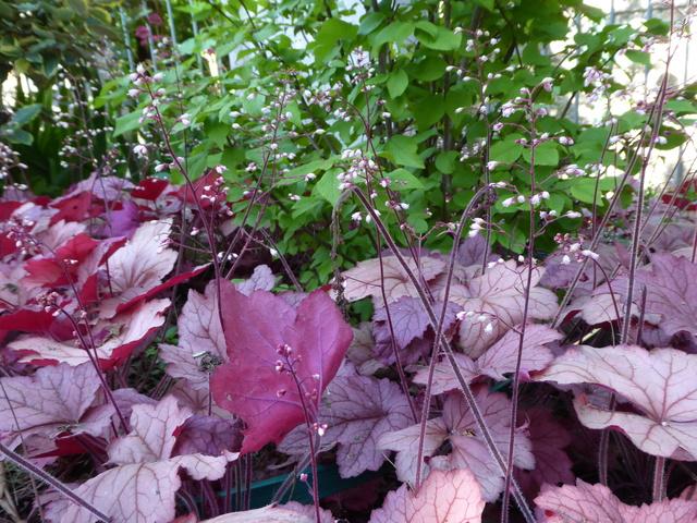 Un petit tour au jardin P1000218