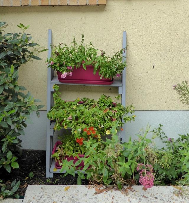 Un petit tour au jardin - Page 2 P1000325