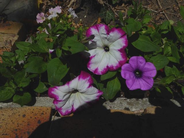 Un petit tour au jardin Pytuni13