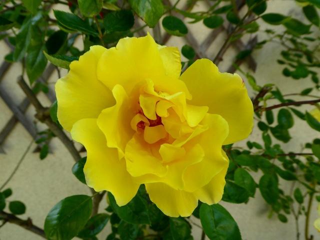 Un petit tour au jardin Rose_j10