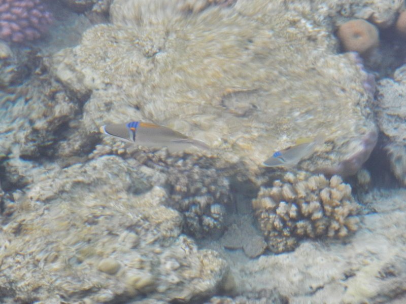 Vacances à Marsa Alam (Mer rouge) Dscn4115