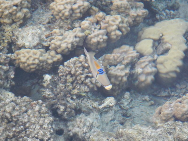 Vacances à Marsa Alam (Mer rouge) Dscn4116