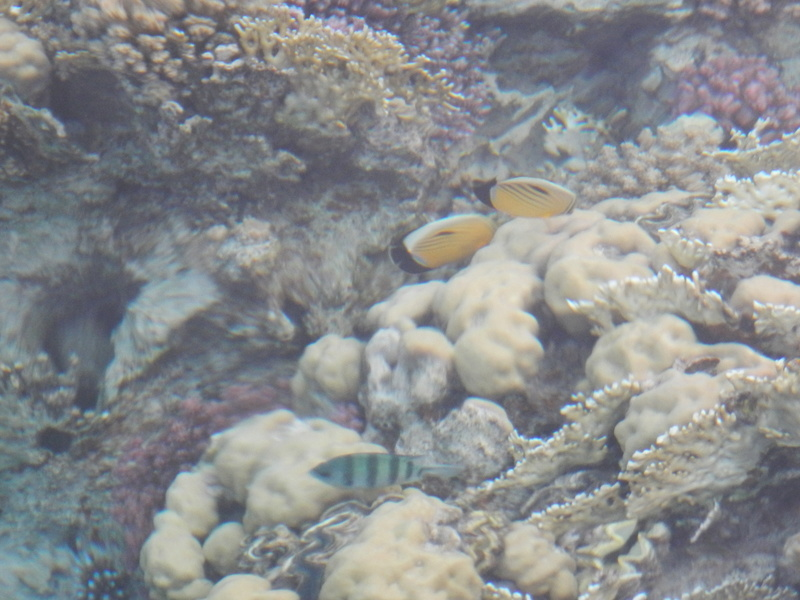 Vacances à Marsa Alam (Mer rouge) Dscn4120