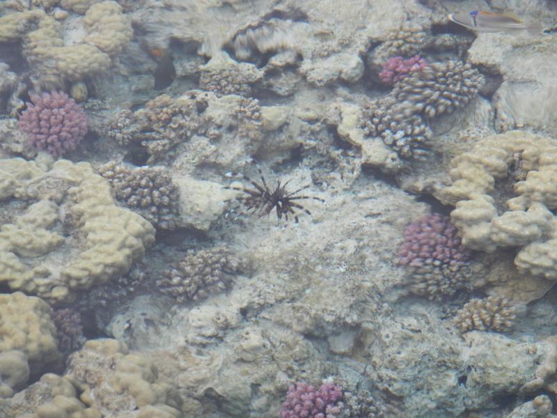 Vacances à Marsa Alam (Mer rouge) Dscn4121