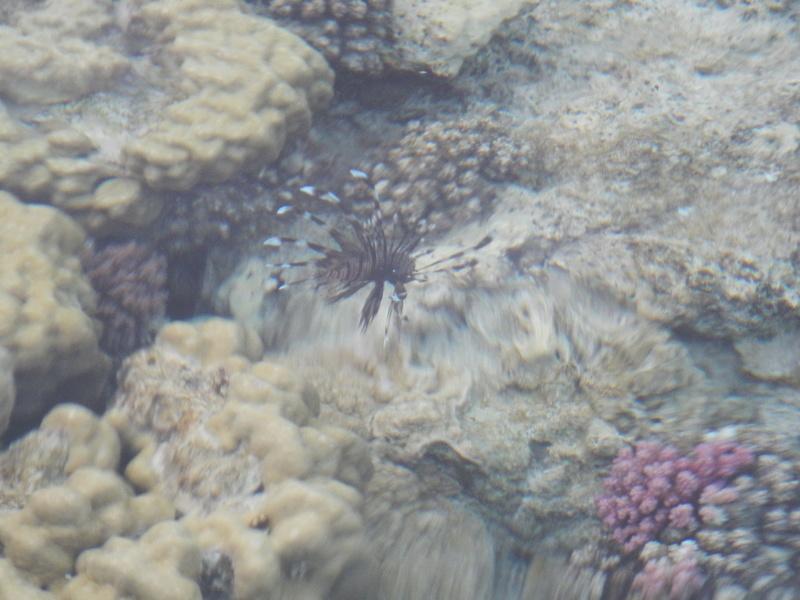 Vacances à Marsa Alam (Mer rouge) Dscn4122