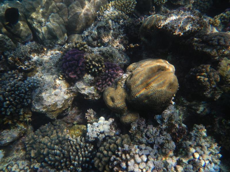 Vacances à Marsa Alam (Mer rouge) Dscn4210