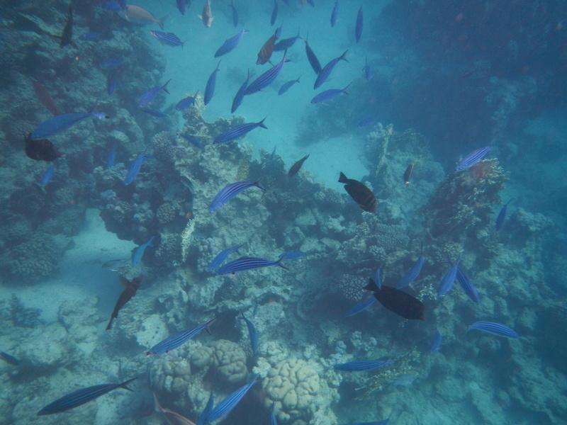Vacances à Marsa Alam (Mer rouge) Dscn4211