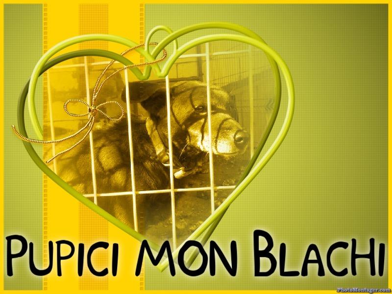BLACHI, ratier, né en 2004 PARRAINE PAR LAIRO - FB - LBC- SOS -SC- AS - Page 3 Blachi10