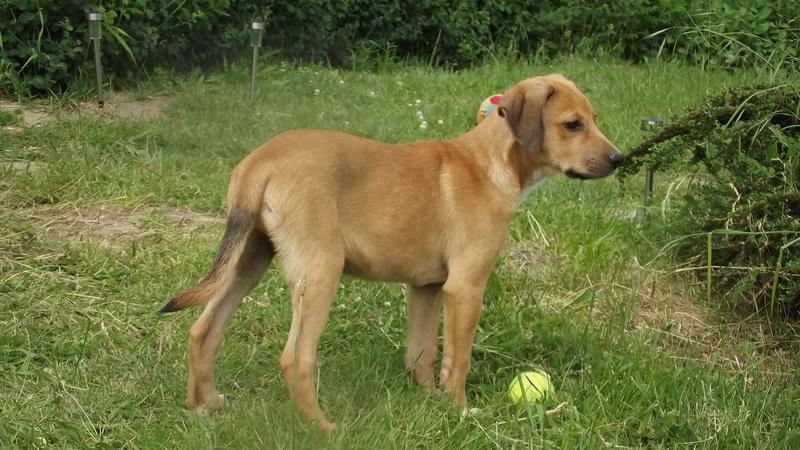 Nouky (fils de Naïa) adopté dans le 28  Dscf0911
