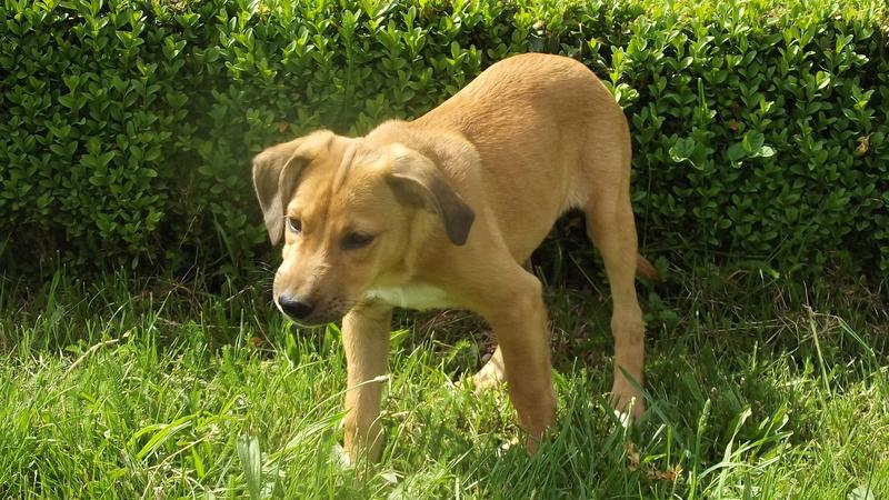 Nouky (fils de Naïa) adopté dans le 28  Dscf0913