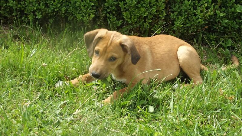 Nouky (fils de Naïa) adopté dans le 28  Dscf0914