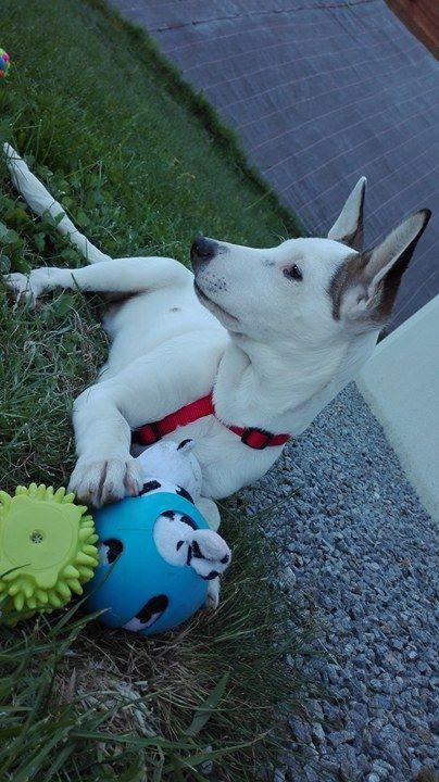 Maïki  adopté par Florian D. et Melle Megane B. dans le 18 Maiki810