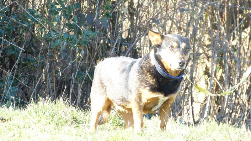 MONA, femelle, croisée, petite taille née env 2012 (Pascani)- adoptée par Lucienne (63)  - Page 5 P1200310