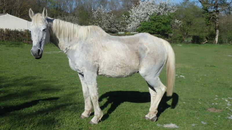MARADAY MOONRAKER dit Blanc Blanc - ONC né en 1992 - adopté en mars 2009 - Page 3 P4090020