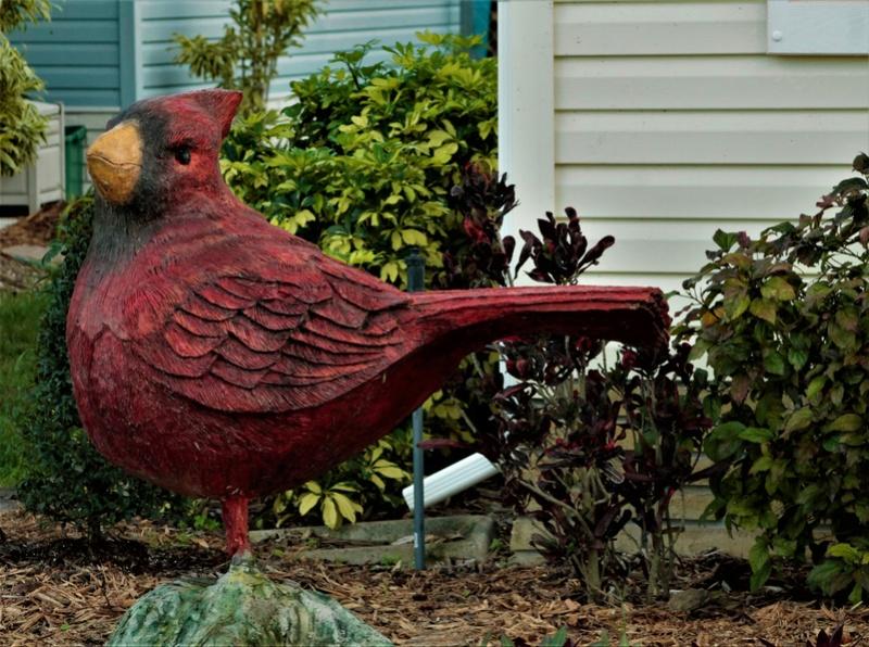 décorations de parterre, Barefoot Bay, Floride, États-Unis  _mg_6512