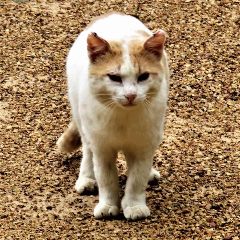 pour les amoureux des chats Img_4013