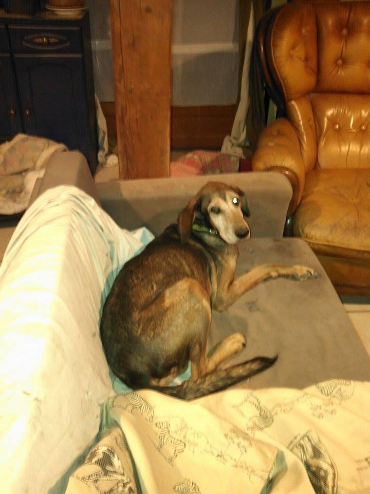 CANDY, femelle âgée berger allemand, née environ en 2006 - en FALD  chez Karine (03) DECEDEE  - Page 5 Djulie10