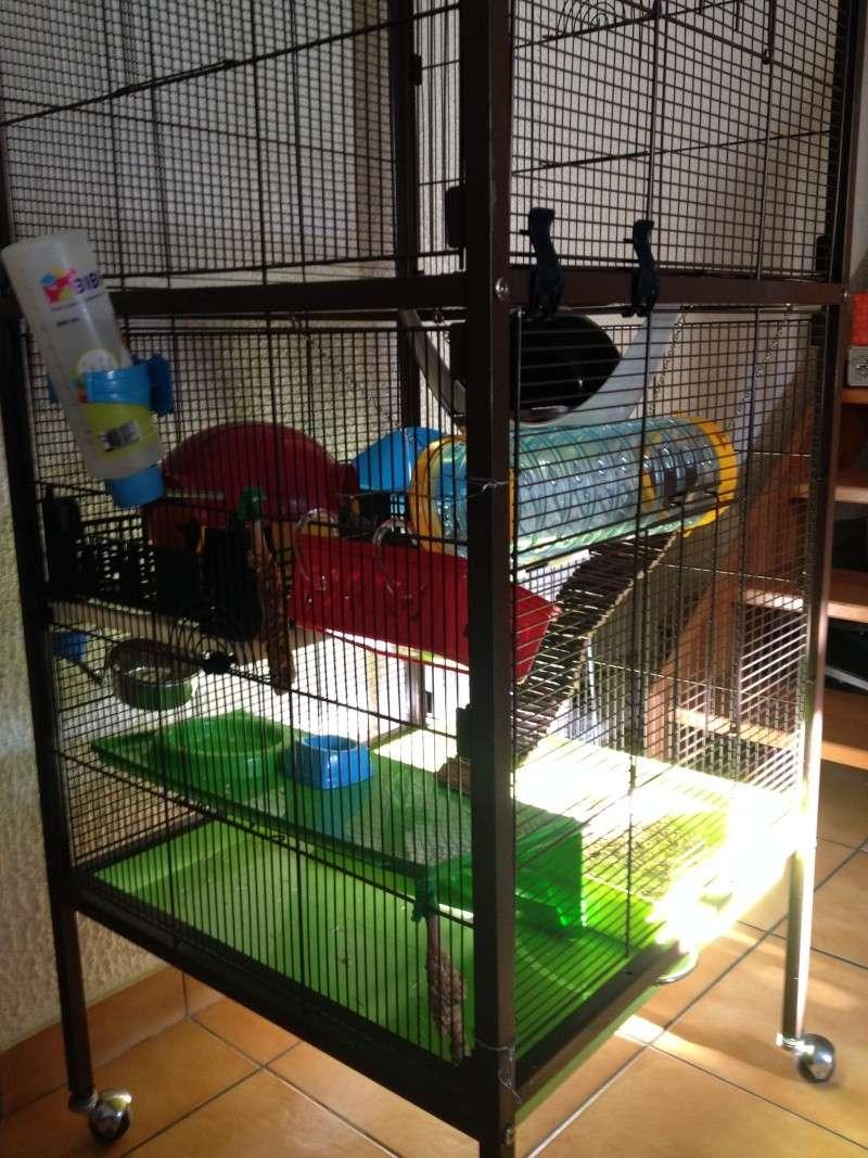 Changement de cage Img_1019