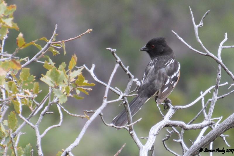 Oiseau d'ailleurs à identifier Image25