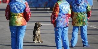 Les chiens errants de Sotchi Les_ch10