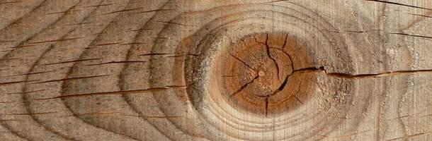 Rompecabezas del tronco de árbol Ojomad10