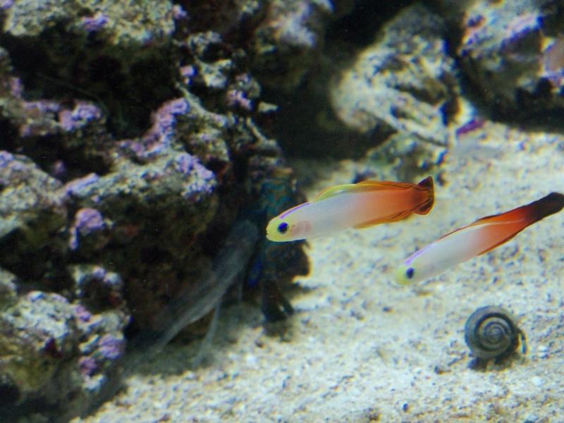 Visite de l'aquarium d'Amnéville du Dimanche 16 Avril 2017 101_8110